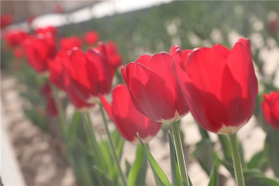 安平志臻的园林环境8767 作者: 来源: 发布时间:2020-5-15 17:30