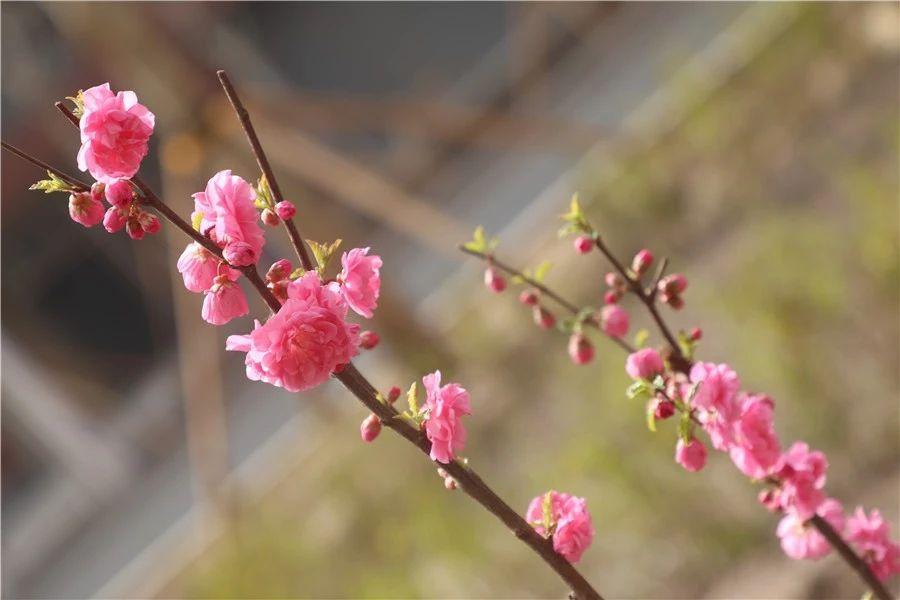 安平志臻的园林环境5792 作者: 来源: 发布时间:2020-5-15 17:30