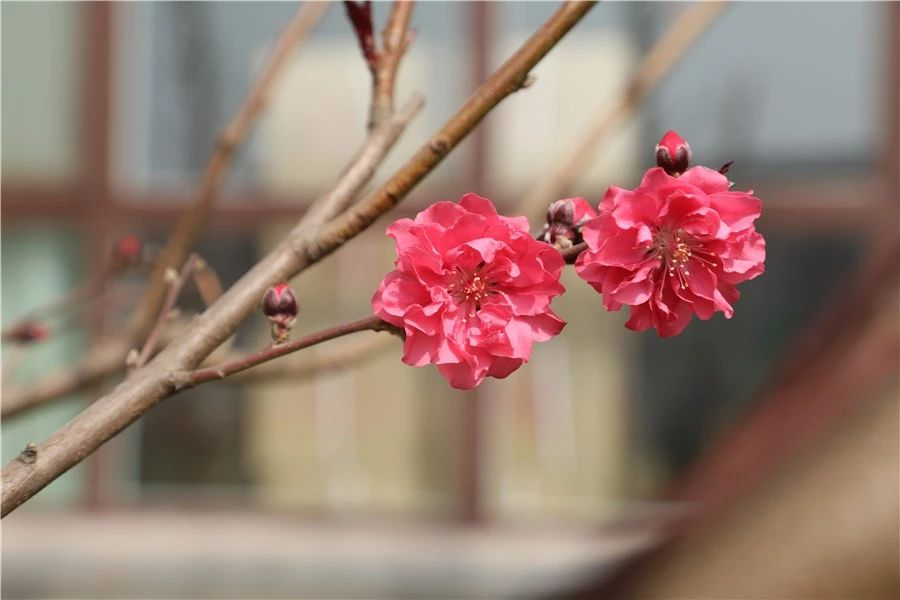 安平志臻的园林环境5218 作者: 来源: 发布时间:2020-5-15 17:30