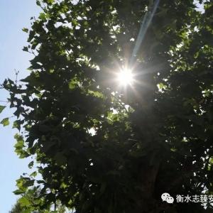 安平志臻 一棵树的自白
