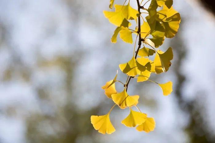 滨湖志臻丨这里的秋惊艳了谁的时光?8445 作者: 来源: 发布时间:2020-10-12 11:30