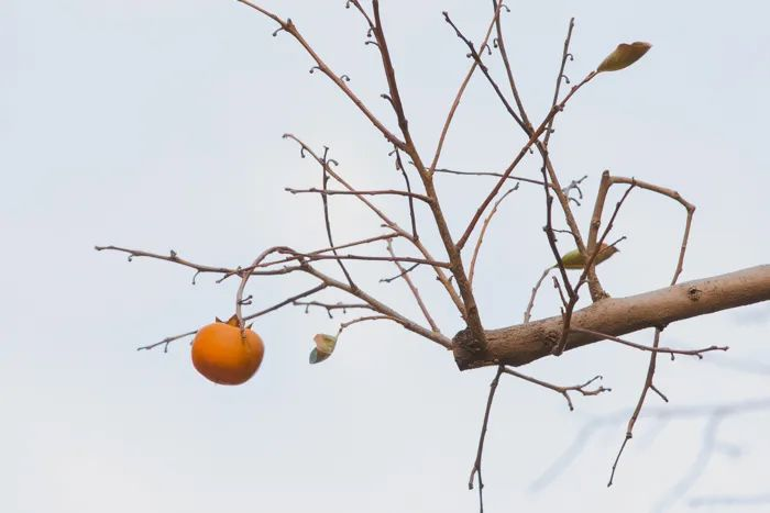 滨湖志臻丨这里的秋惊艳了谁的时光?4727 作者: 来源: 发布时间:2020-10-12 11:30