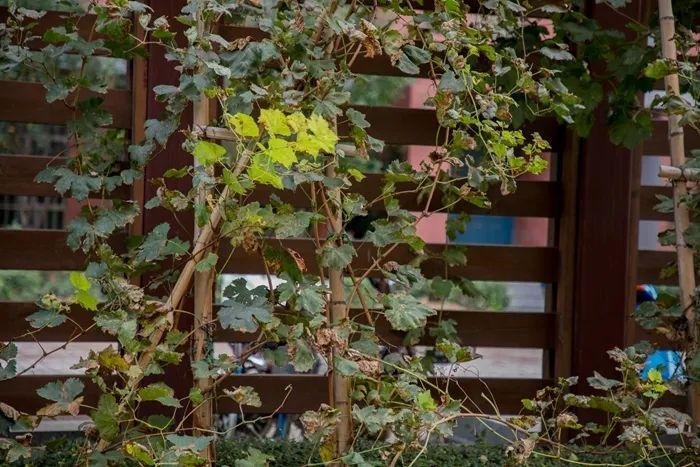 滨湖志臻丨这里的秋惊艳了谁的时光?7293 作者: 来源: 发布时间:2020-10-12 11:30