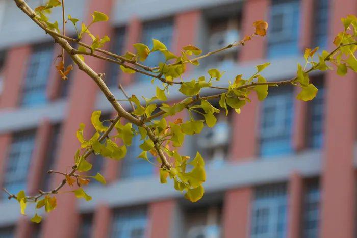 滨湖志臻丨这里的秋惊艳了谁的时光?451 作者: 来源: 发布时间:2020-10-12 11:30