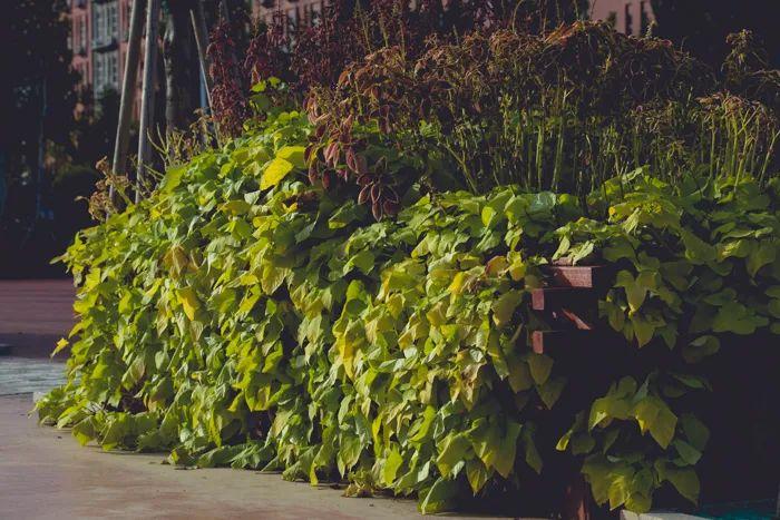 滨湖志臻丨这里的秋惊艳了谁的时光?4528 作者: 来源: 发布时间:2020-10-12 11:30