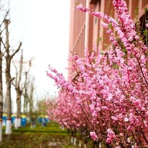 乘风破浪的志臻丨春暖花正红,快来看看,志臻颜色知多少?