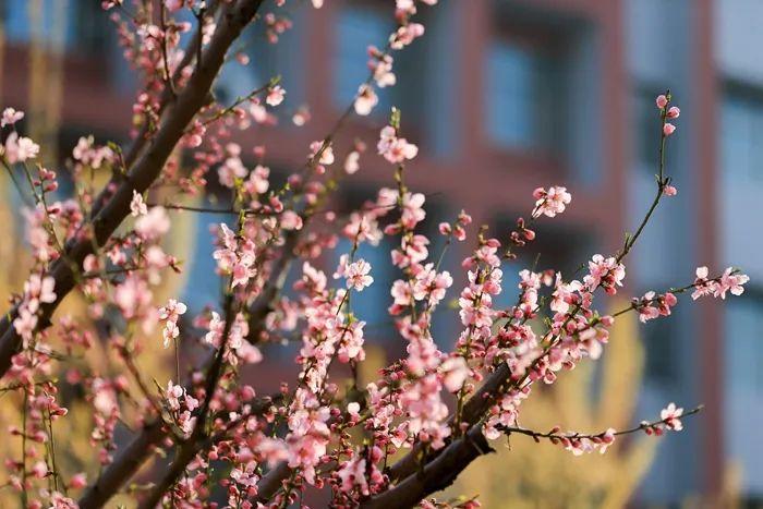 乘风破浪的志臻丨春暖花正红,快来看看,志臻颜色知多少?7399 作者: 来源: 发布时间:2021-3-27 14:48