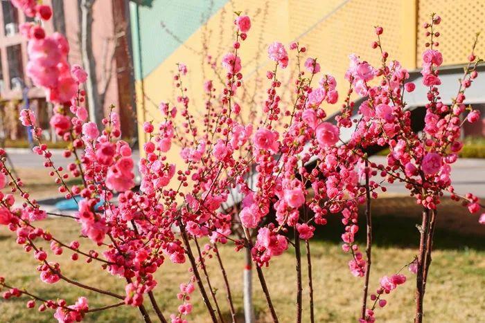 乘风破浪的志臻丨春暖花正红,快来看看,志臻颜色知多少?7428 作者: 来源: 发布时间:2021-3-27 14:48